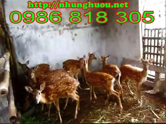 Trại chăn nuôi hươu và chăn nuôi nai Trịnh Thiện